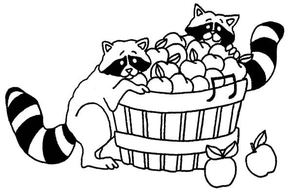 Two Racoons Eat Apple From Basket Coloring Pages