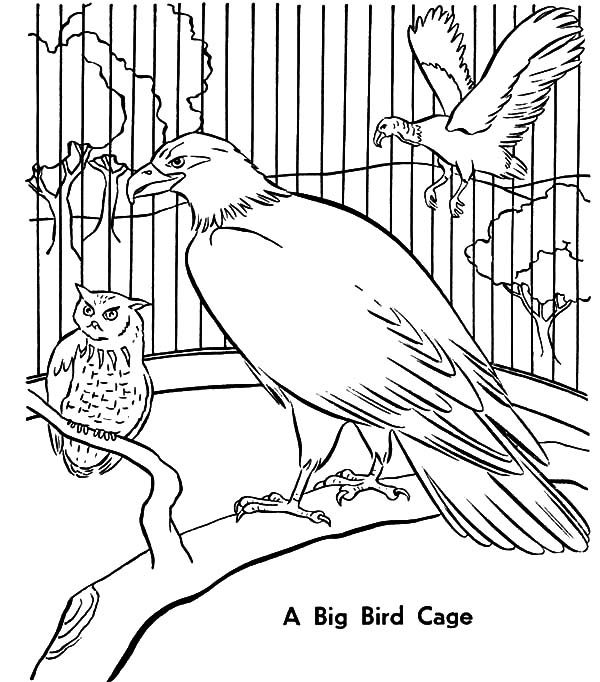 Bird Cage, : A Big Bird Cage Coloring Pages