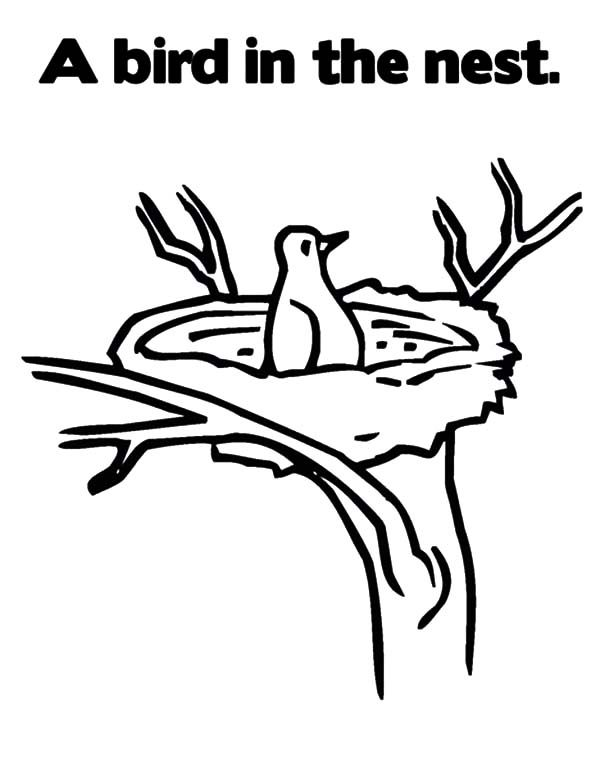 Bird Nest, : A Bird in the Bird Nest Coloring Pages