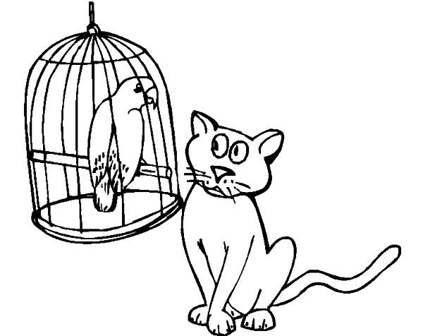 Bird Cage, : A Cat Watch Bird in Bird Cage Carefully Coloring Pages
