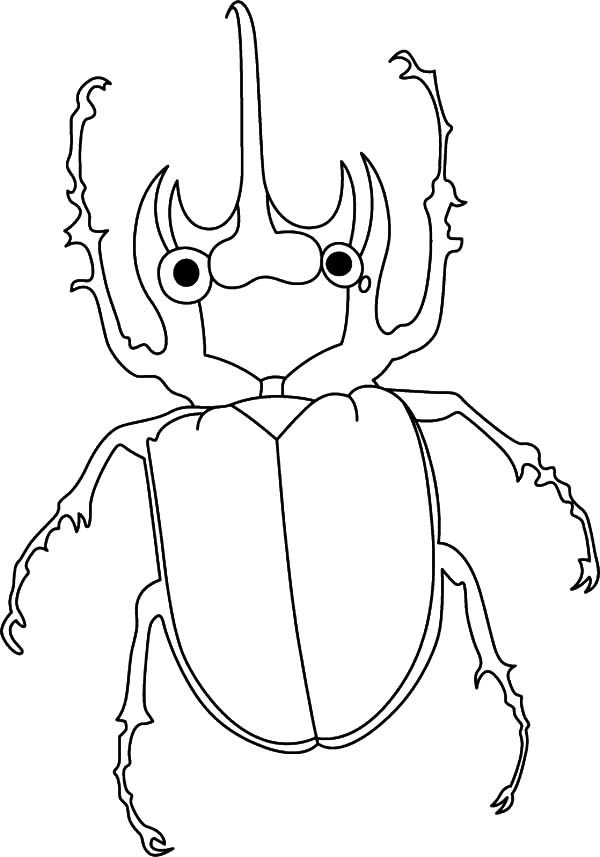 Beetle, : Amazing Animals Beetle Coloring Pages