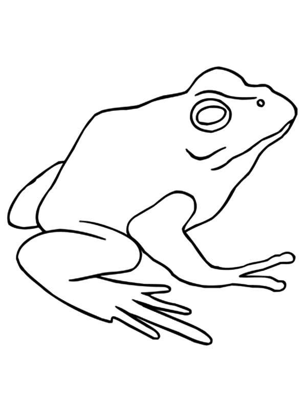 Bullfrog, : American Bullfrog Outline Coloring Pages