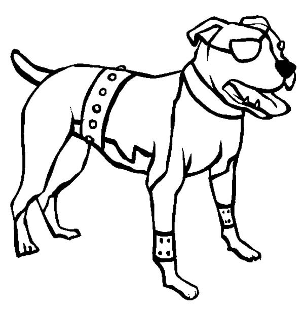 Boxer Dog, : American Pitbull Boxer Dog Coloring Pages