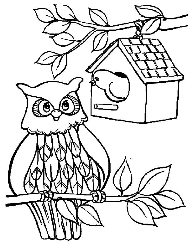Bird House, : An Owl Bird House Coloring Pages