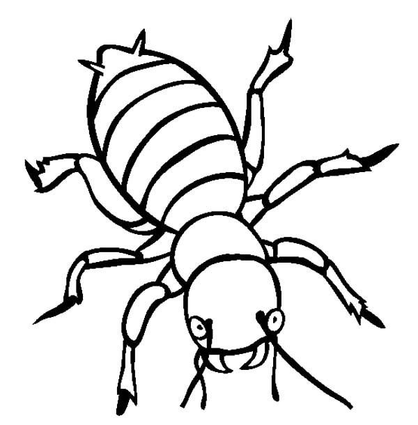 Beetle, : Angry Beetle Coloring Pages