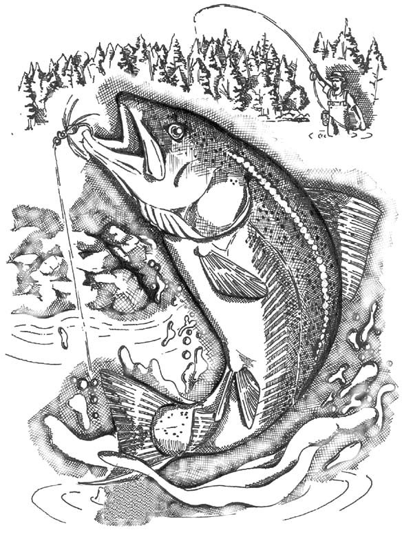 Apache Trout, : Apache Trout Breaks the Calm of a Clearwater Stream Coloring Pages