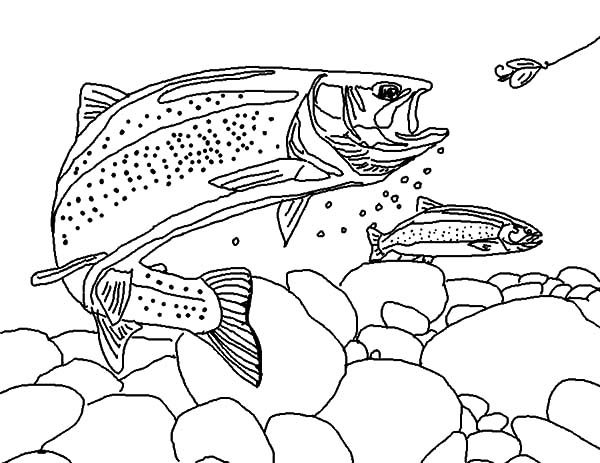 Apache Trout, : Apache Trout Chasing Fisherman Bair Coloring Pages