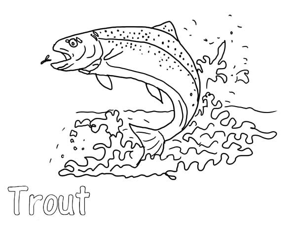 Apache Trout, : Apache Trout Eat Insect Coloring Pages
