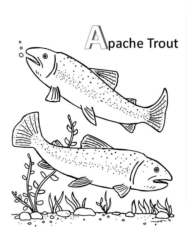 Apache Trout, : Apache Trout Mating Coloring Pages