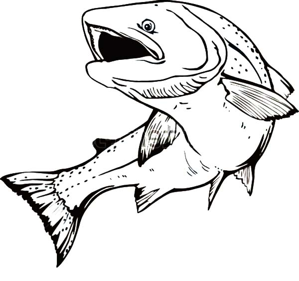fish mouth template - brook trout sketches sketch coloring page
