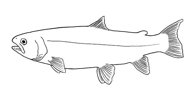 Apache Trout, : Apache Trout Outline Coloring Pages