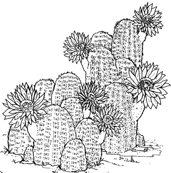 Cactus, : Awesome Cactus Image Coloring Pages