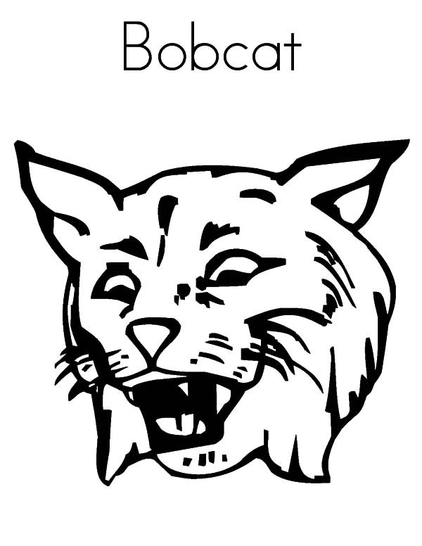 Bobcat, : B is for Bobcat Coloring Pages