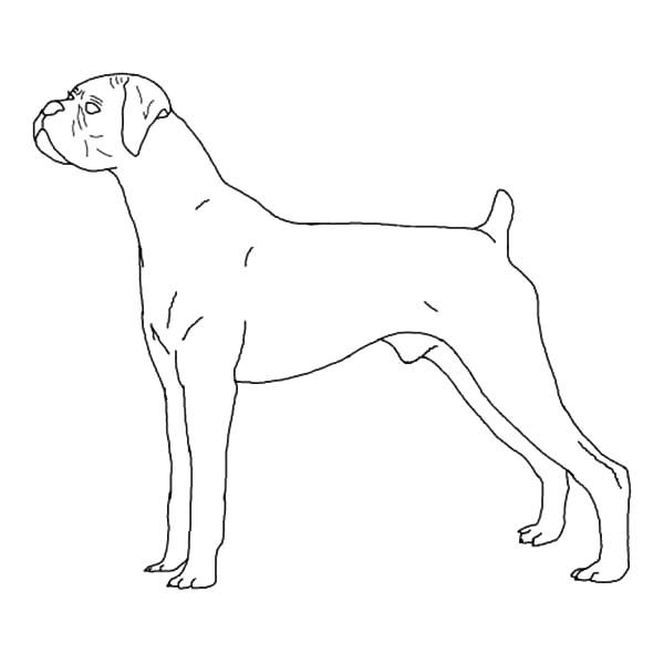 Boxer Dog, : B is fro Boxer Dog Coloring Pages