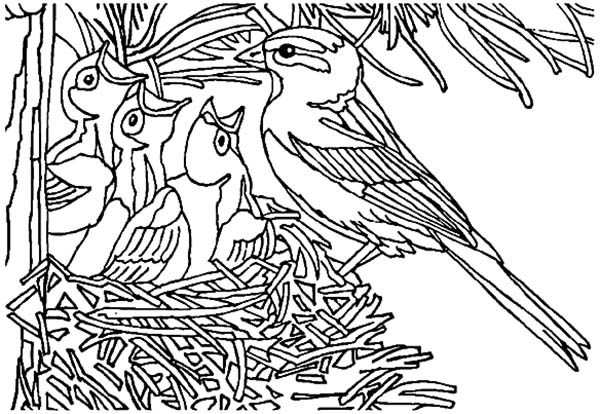 Bird Nest, : Baby Bird Open Their Mouth Wide in Bird Nest Coloring Pages