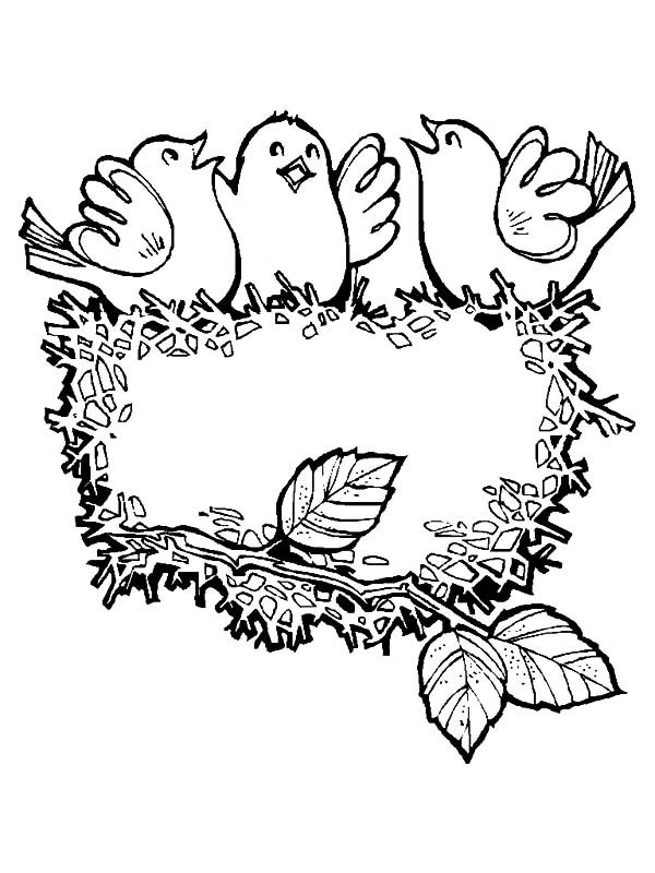 Bird Nest, : Baby Bird Singing in Their Bird Nest Coloring Pages