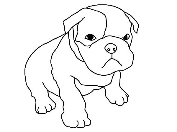 Boxer Dog, : Baby Boxer Dog Coloring Pages