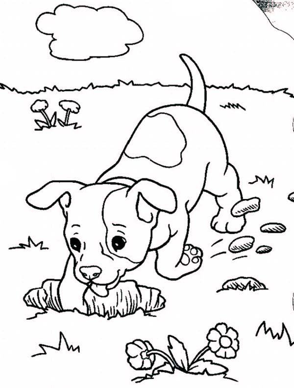 baby boxers coloring pages - photo #1
