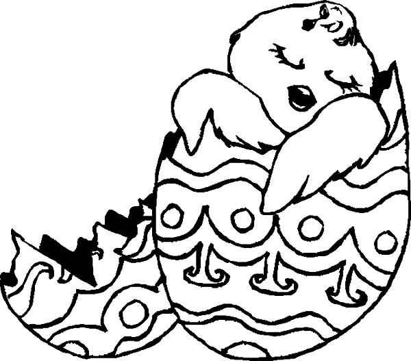 Baby Chicken Sleeping in Broken Egg Coloring Pages: Baby Chicken ...