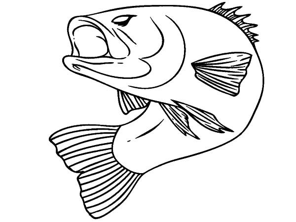 Bass Fish, : Bass Fish Bend His Body Coloring Pages