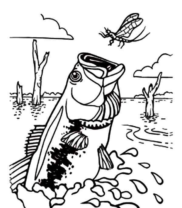 Bass Fish, : Bass Fish Catching Dragonfly Coloring Pages