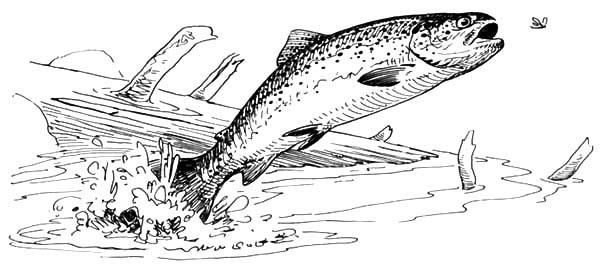 Bass Fish, : Bass Fish Jump Out of Water Coloring Pages