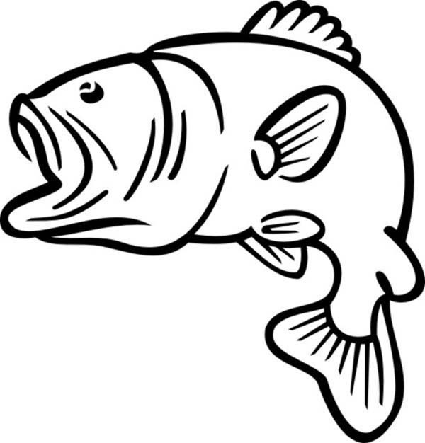 Bass Fish, : Bass Fish Outline Coloring Pages