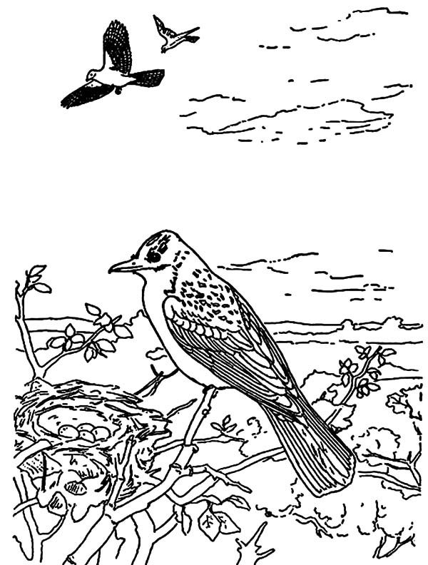 Bird Nest, : Beautiful Bird Keep the Bird Nest Safe Coloring Pages