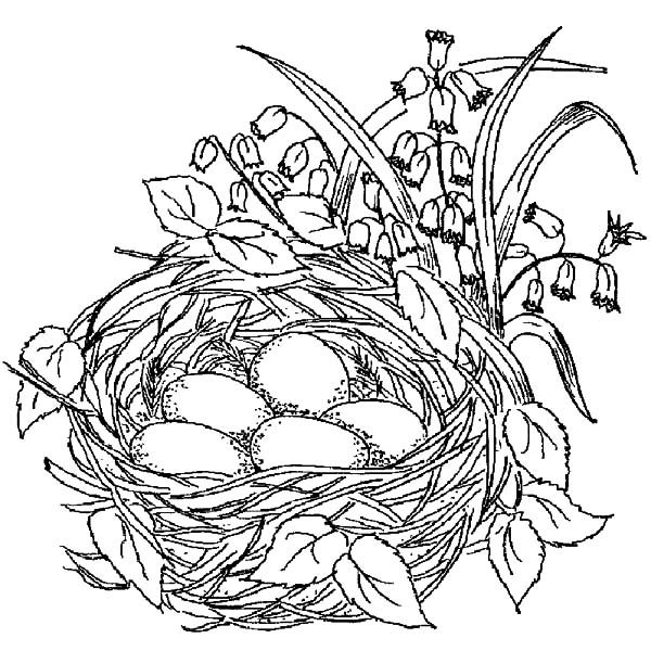 Bird Nest, : Beautiful Bird Nest Coloring Pages