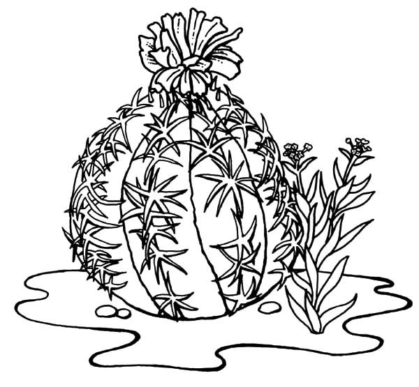 Cactus, : Beautiful Cactus Coloring Pages
