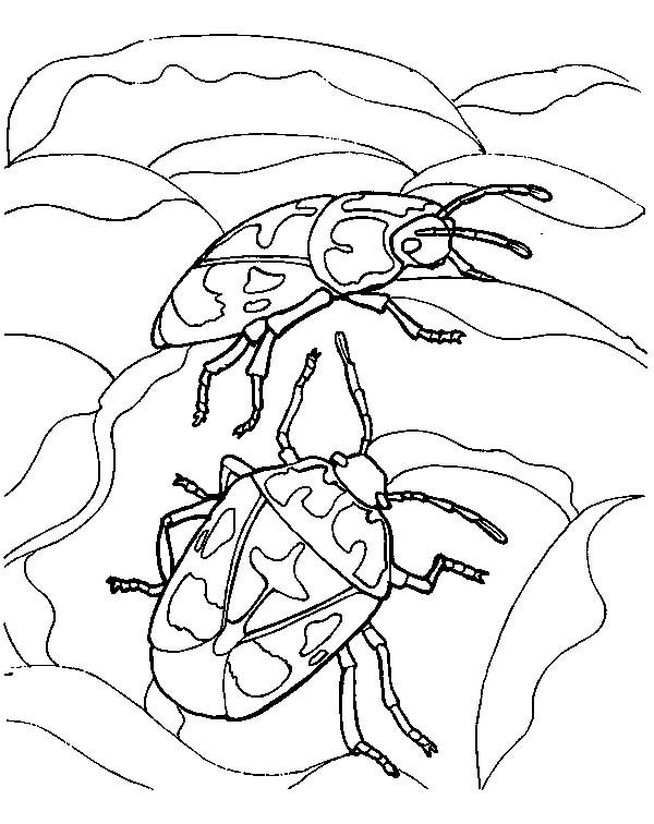 Beetle, : Beetle Couple Mating Coloring Pages
