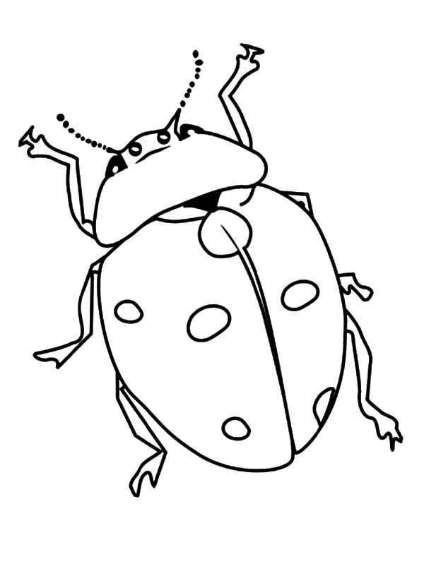 beetle lady bug coloring pages