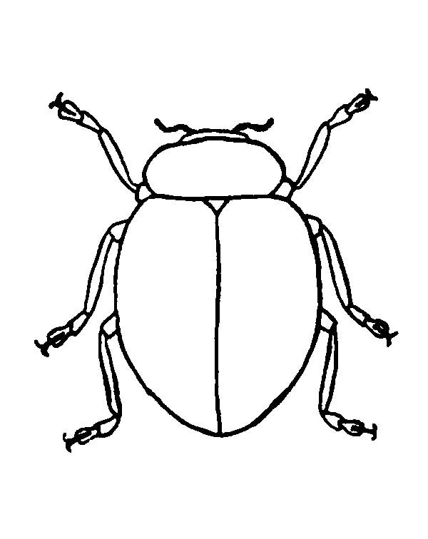 Beetle, : Beetle Picture Coloring Pages
