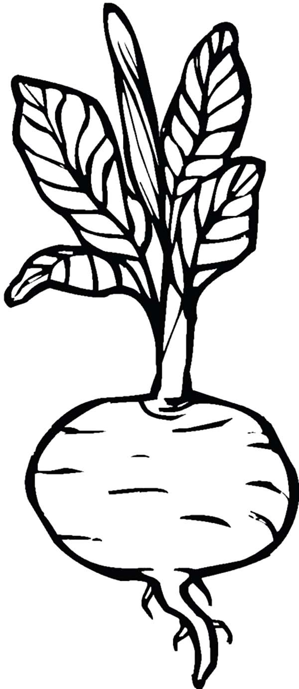 Beets, : Beets Coloring Pages for Kids
