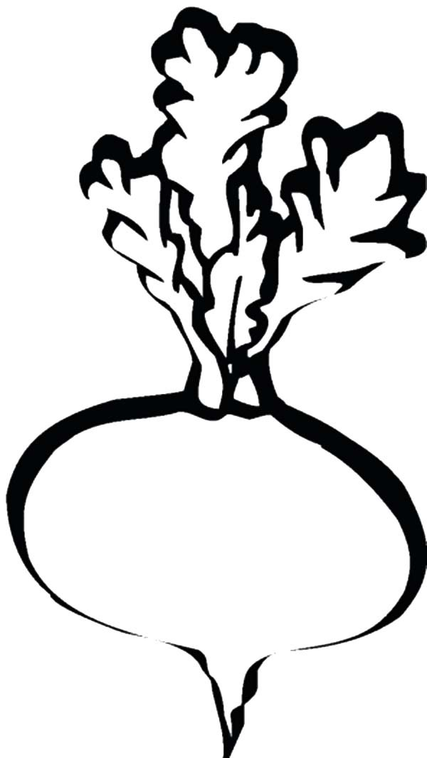 Beets, : Beets Image Coloring Pages