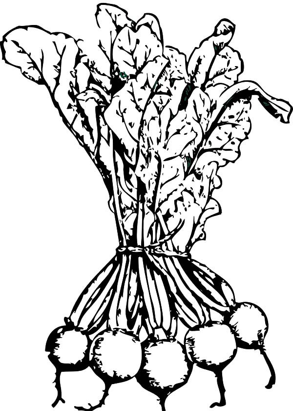 Beets, : Beets for Sale Coloring Pages