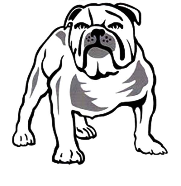 Bulldog, : Beware to Bulldog Coloring Pages
