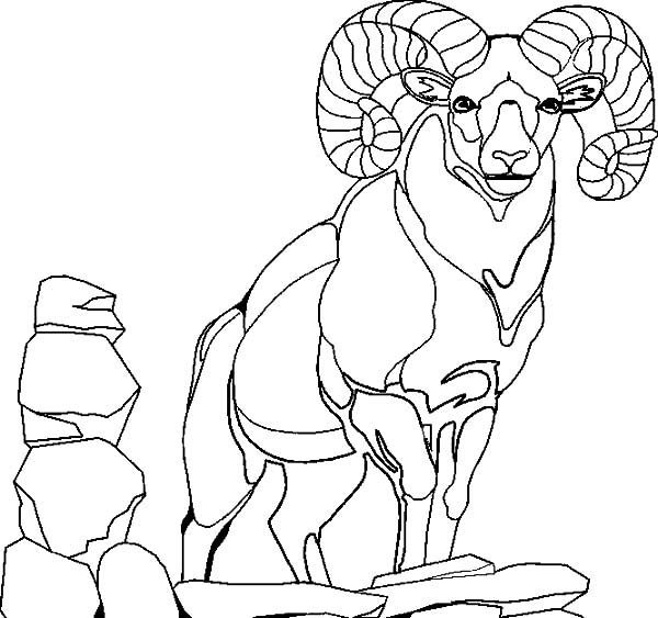 Billy the Goat, : Big Brother of Billy the Goat Coloring Pages