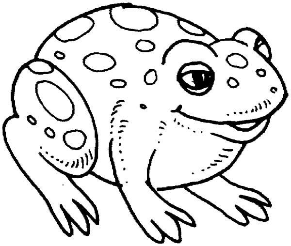 Bullfrog, : Big Bullfrog Coloring Pages