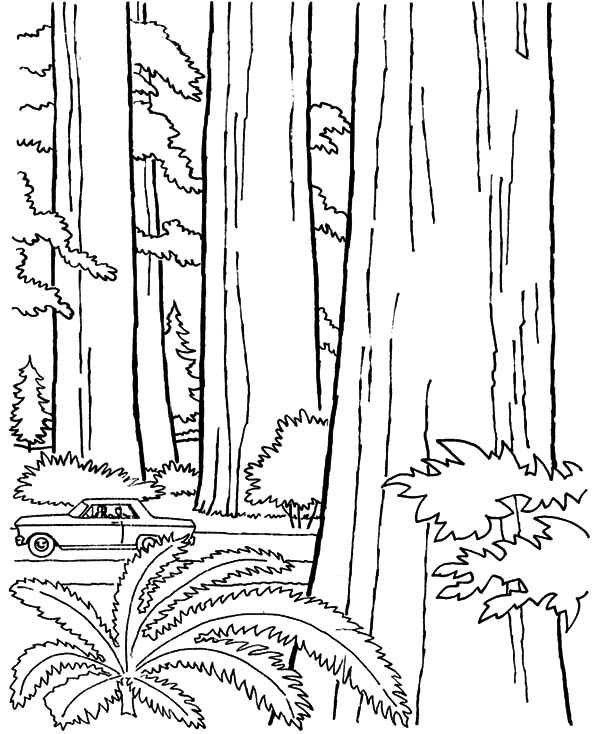 Arbor Day, : Big Tree on Arbor Day Coloring Pages