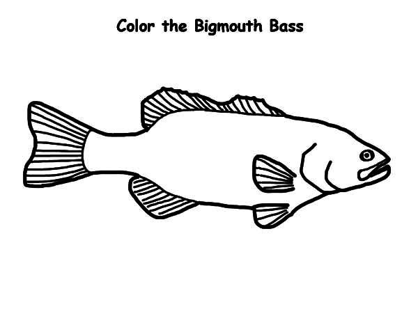 Bass Fish, : Bigmouth Bass Fish Coloring Pages