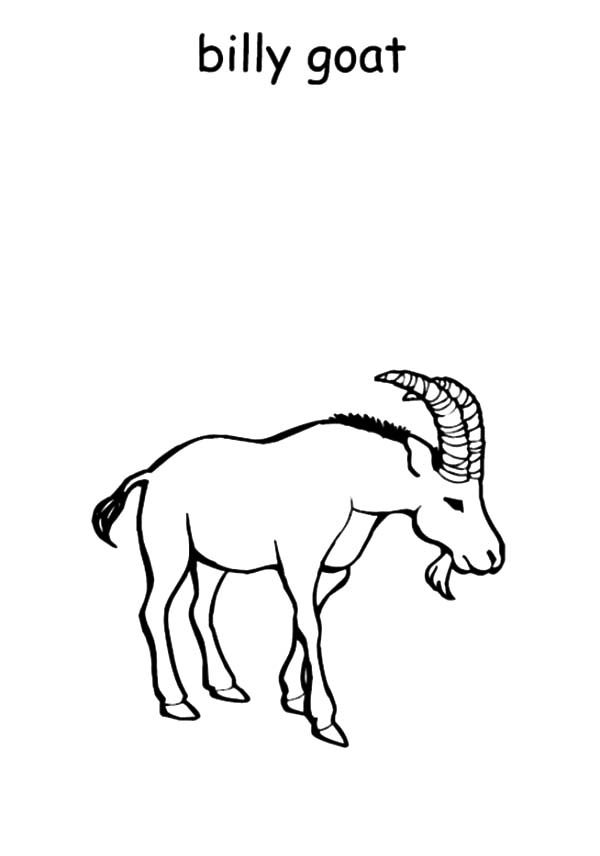 Billy the Goat, : Billy the Goat Coloring Pages for Kids