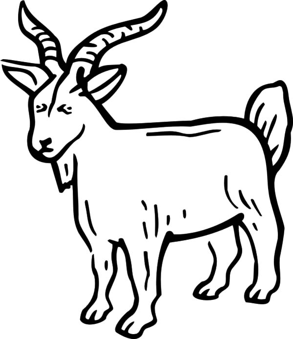 boer goat coloring pages - billy goat coloring page az pages sketch coloring page