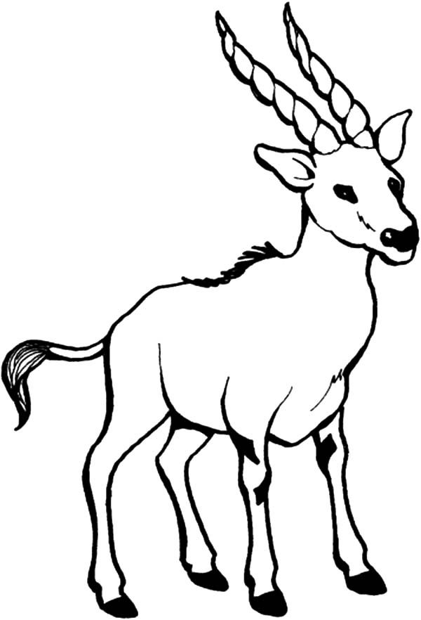 Billy the Goat, : Billy the Goat with Long Sharp Horn Coloring Pages