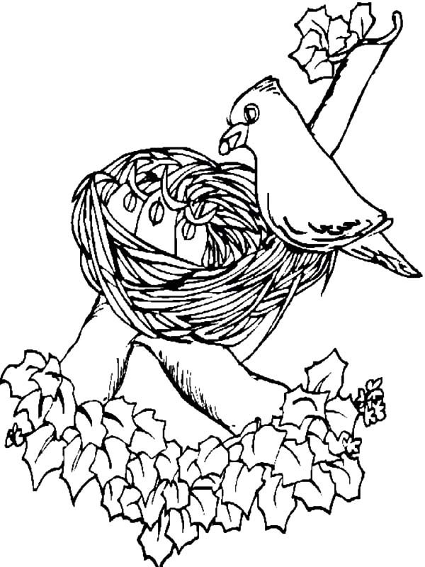 Bird Nest, : Bird Decorating Her Bird Nest Coloring Pages