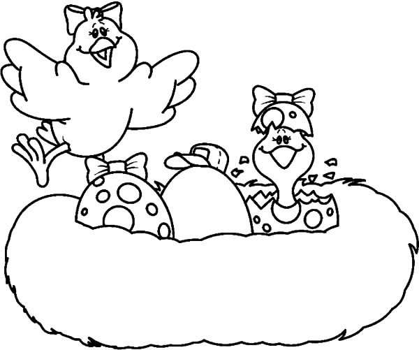 Bird Nest, : Bird Egg Hatching in Bird Nest Coloring Pages