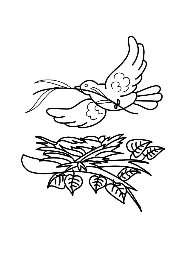 Bird Nest, : Bird Flying Over Her Bird Nest Coloring Pages