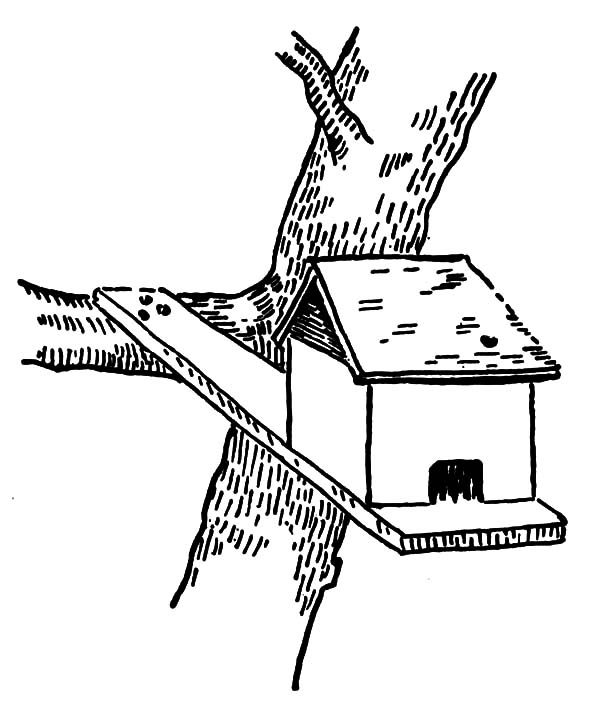 Bird House, : Bird House at the Edge of Branch Coloring Pages