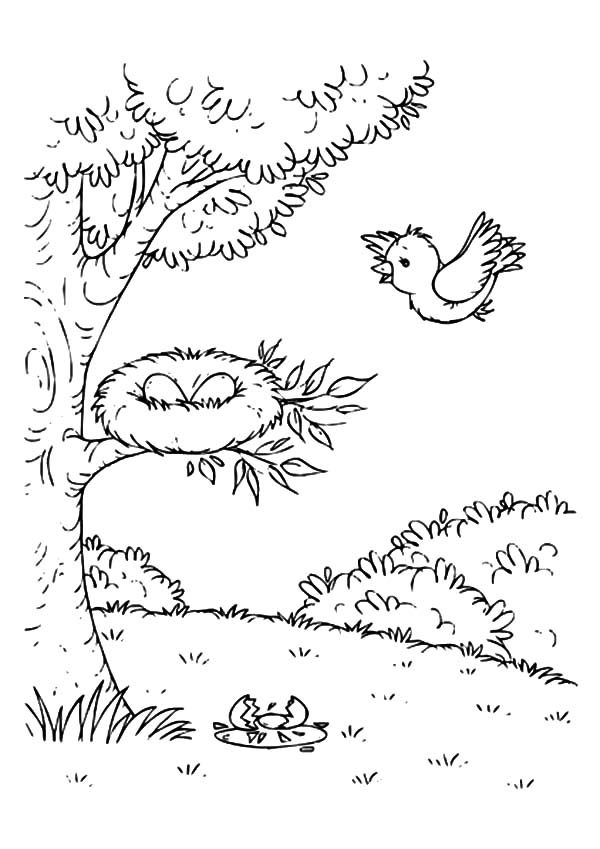 Bird Nest, : Bird Mother Flying Come Home to Bird Nest Coloring Pages