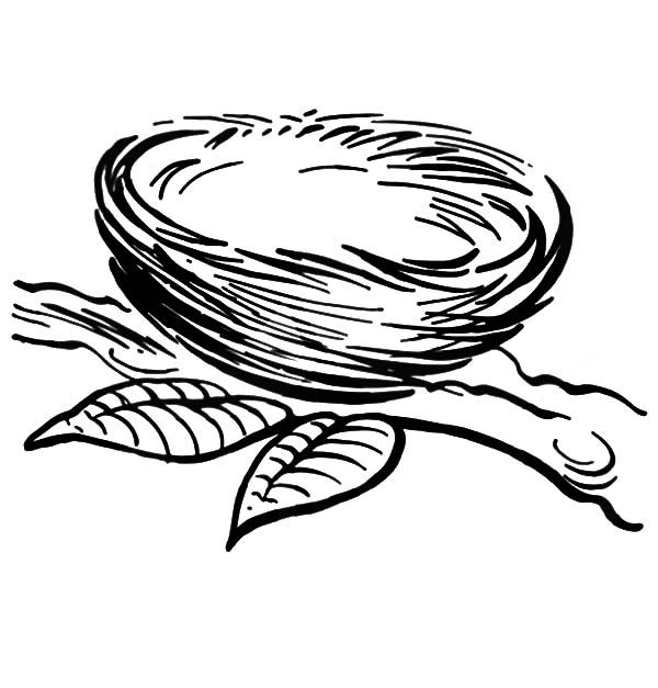 Bird Nest, : Bird Nest on a Branch Coloring Pages